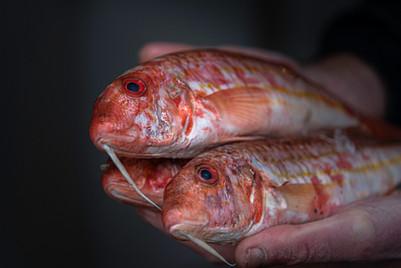 Fishmonger-13.jpg