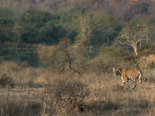 COVID -19: Wildlife Under Siege: An Indian Solution to a Global Crisis
