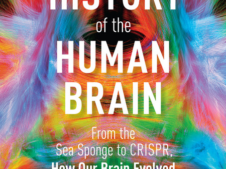 'A History of the Human Brain' by Bret Stetka, reviewed by Dr. Lloyd Sederer