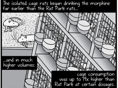 "What Does ""Rat Park"" Teach Us About Addiction?"