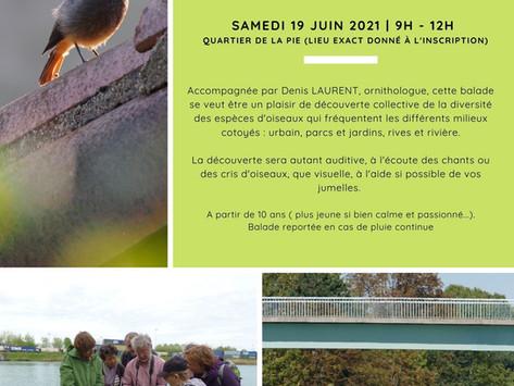 Balade ornithologique le samedi 19 juin sur les bords de marne