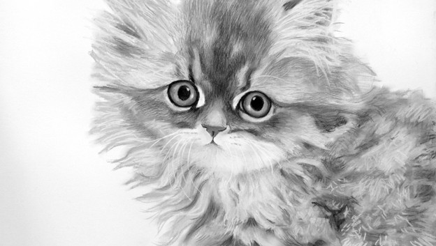 Golden dollface persian chinchilla kitten.jpg