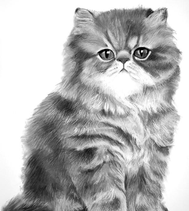 Ultrafaced brown tabby Persian kitten.jpg