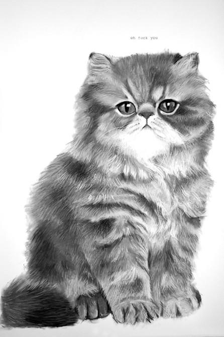 Ultrafaced brown tabby Persian kitten