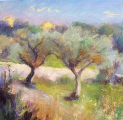 Olive Trees, Sicily