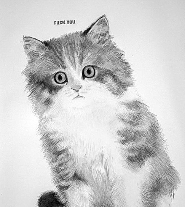 Maine Coon kitten.jpg