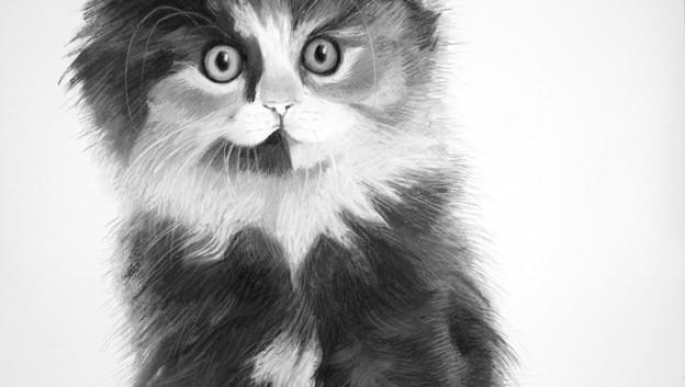 Calico Norwegian Forest kitten.jpg