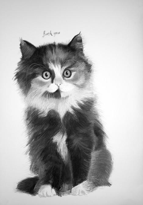 Calico Norwegian Forest kitten.