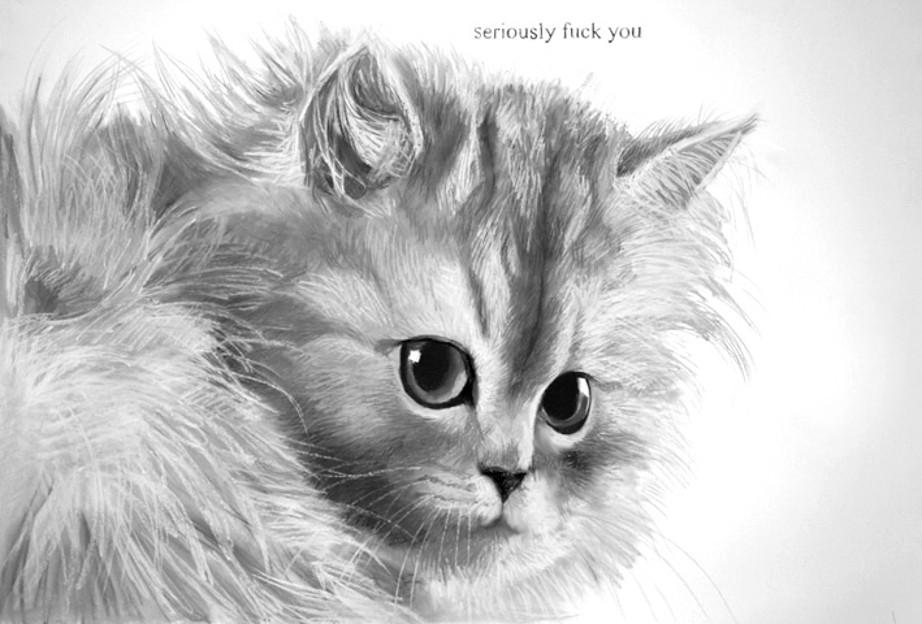 Silver smoke Chinchilla kitten.jpg
