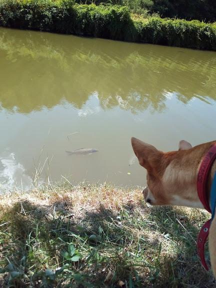 Pêche à la carpe au Canal (à 2km)