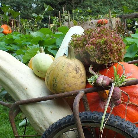 Légumes d'été
