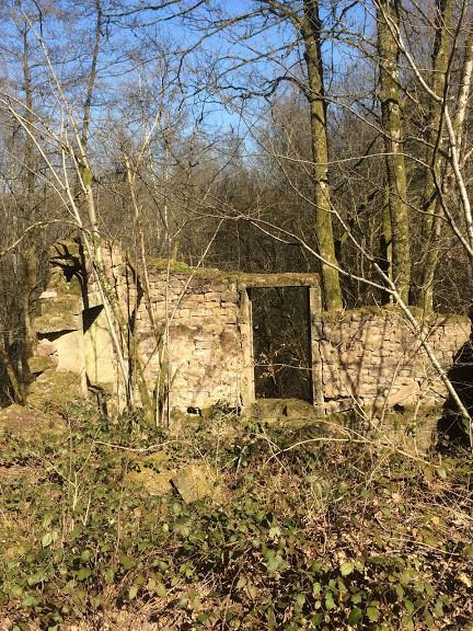Il n'est pas rare de croiser des ruines dans les forêts