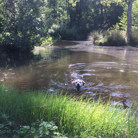 Petite Nage à l'étang