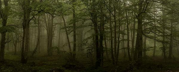 Bosque web .JPG