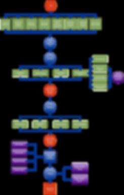 ITSP Process Flowchart.png