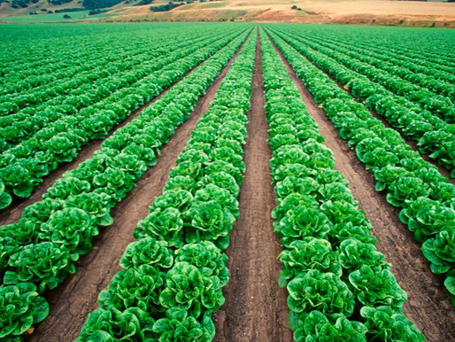 How Coronavirus is Impacting Farmers