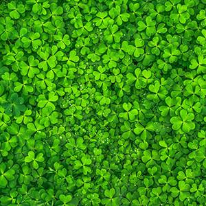 green, colour, fabric, interior design, curtains, textile