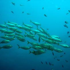 ITM FISHING SHOW