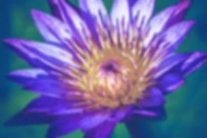 blue lotus_edited.jpg