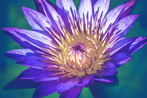 blue lotus_edited.jpg
