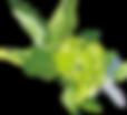 植物4.png