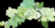 植物6.png