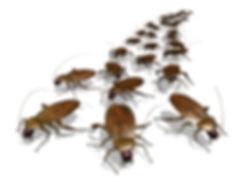 лучшая компания по уничтожению блох , клопов,  тараканов, паразитов, насекомых, крыс, мышей