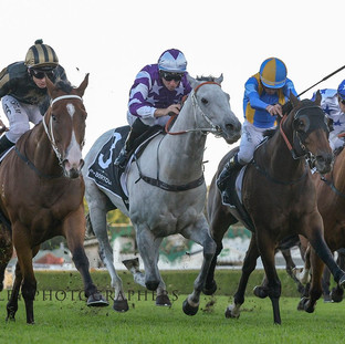 Snitz a gritty winner at Randwick