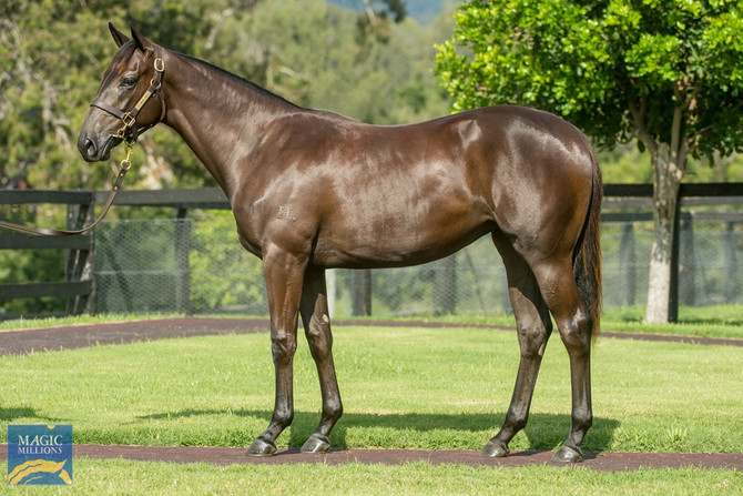Ownership opportunities: Two exciting fillies join the stable