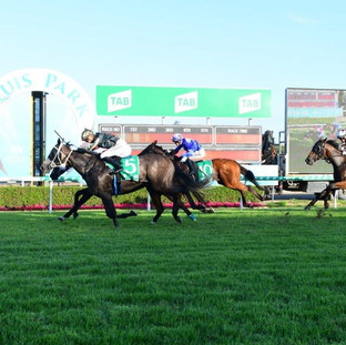 Our Echo wins at Gold Coast - Viva Racin