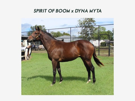 Spirit of Boom x Dyna Myta Shares Available
