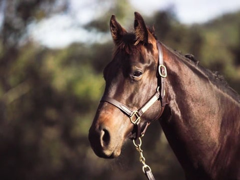 Spill the Bean x Dream Speed Colt - Ownership Available