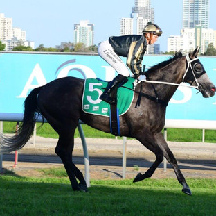 Our Echo at Gold Coast - Viva Racing.jpg