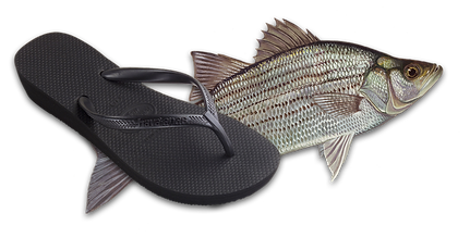 Floppy Fish.png