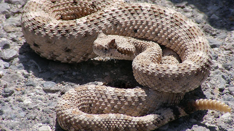 Snake Avoidance Clinic - 10 minute time slots