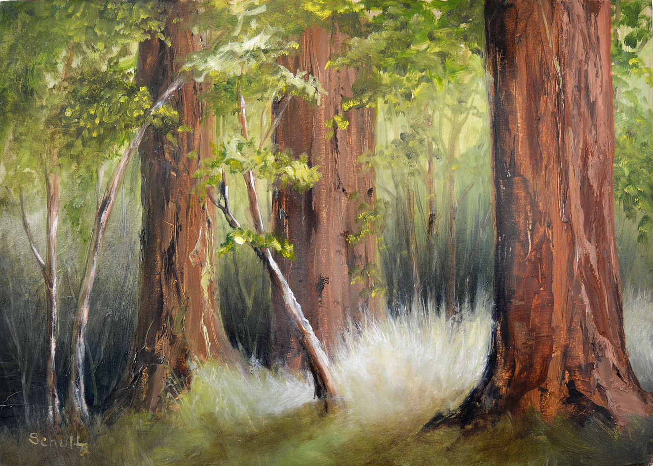 """Redwoods"""