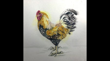 Paint a Rooster in Watercolor