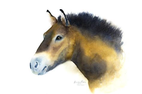 Paint a Przewalski's Horse in Watercolor
