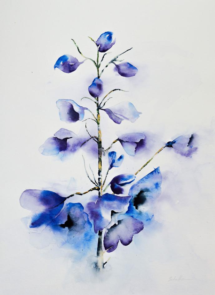 Blue Delphiniums 2