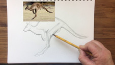 Draw a Kangaroo - Drawing and Sketching Tips
