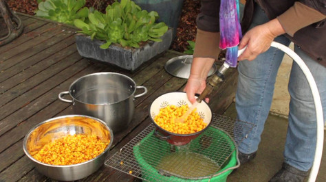 Make Delicious Corn Tortillas from Scratch