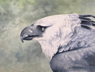 My Finished Harpy Eagle