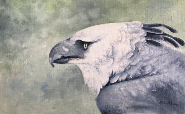 My Harpy Eagle is finished!