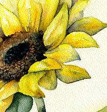 sun thumbnail.jpg