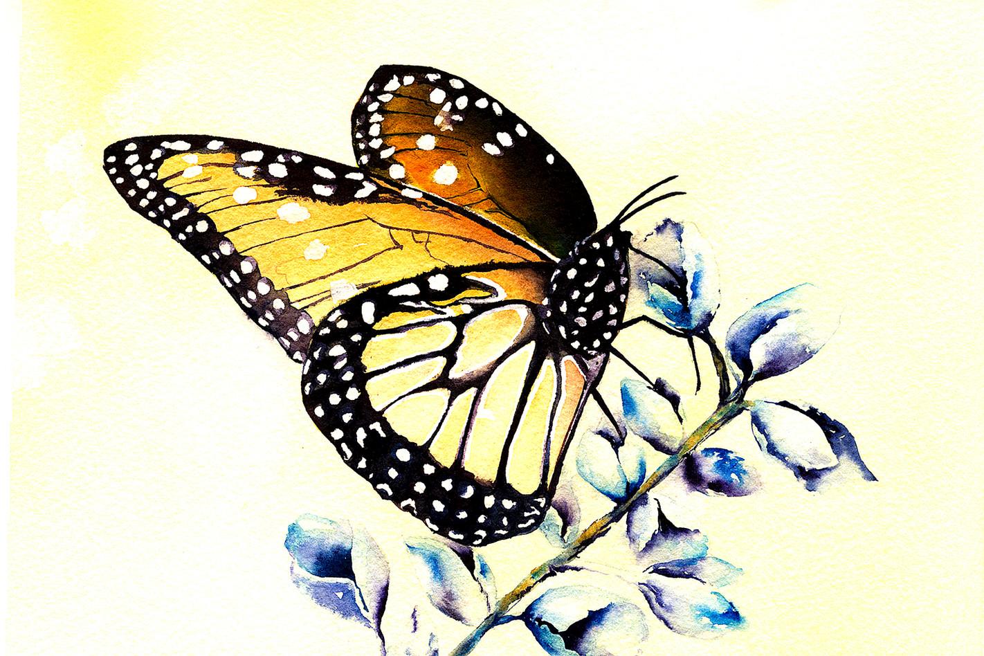 Monarch on Blue