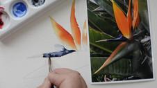 Bird of Paradise Part 5