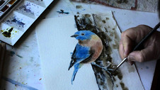 Eastern Bluebird Condensed Part 2