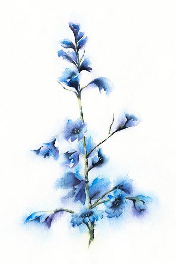 Blue Delphiniums 3