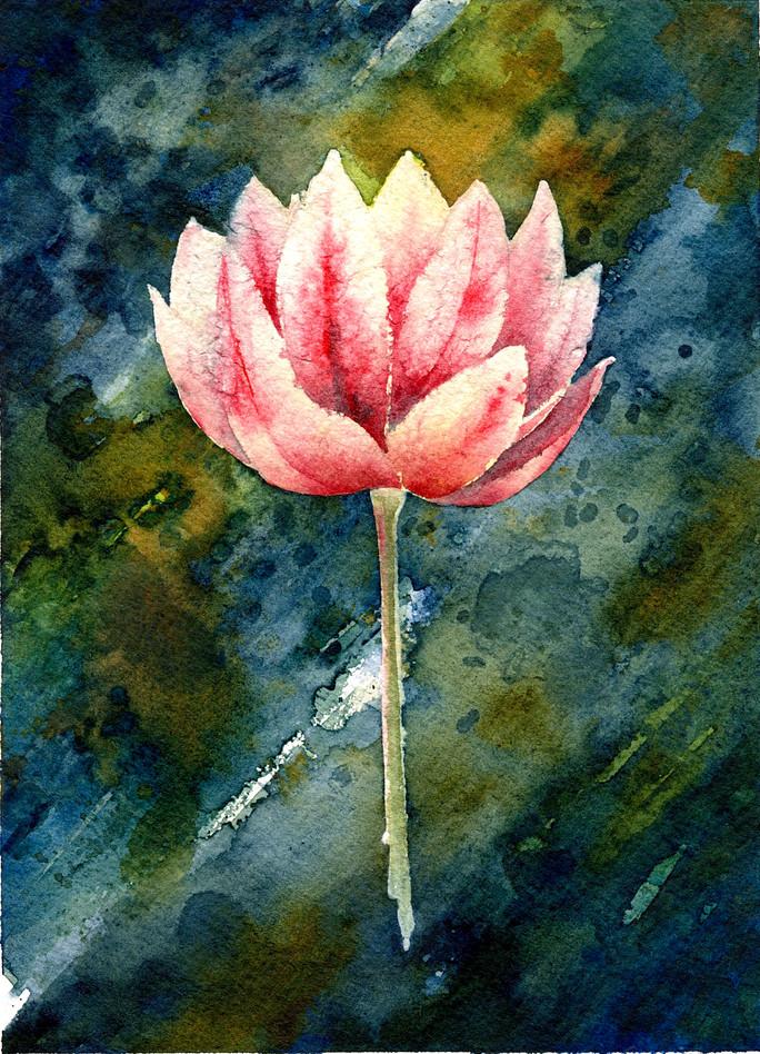 Lotus in Light