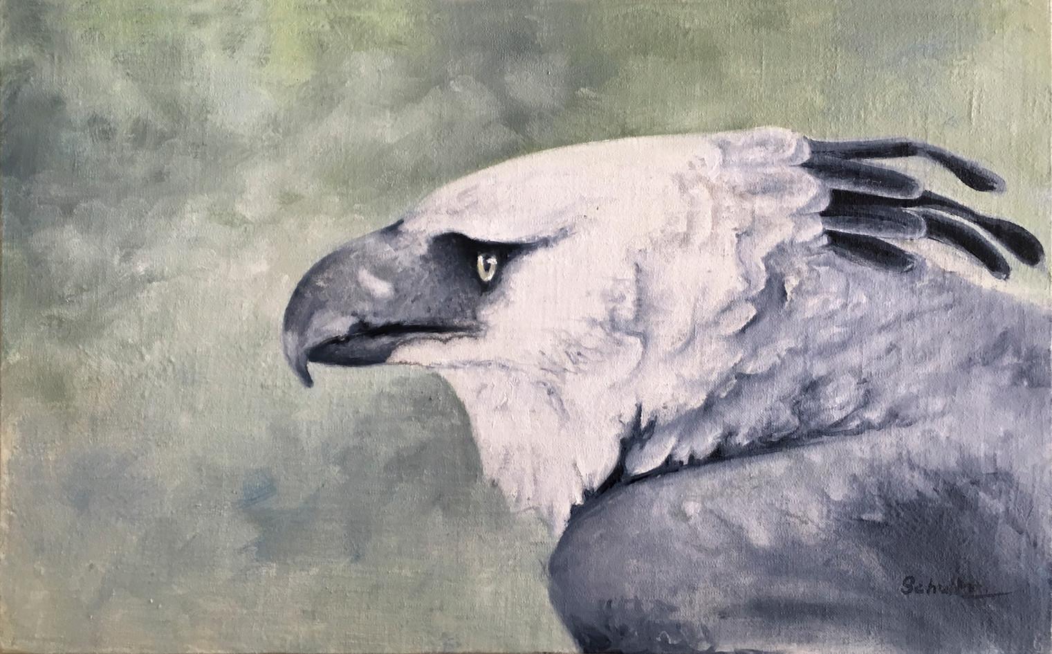 """Harpy Eagle"""